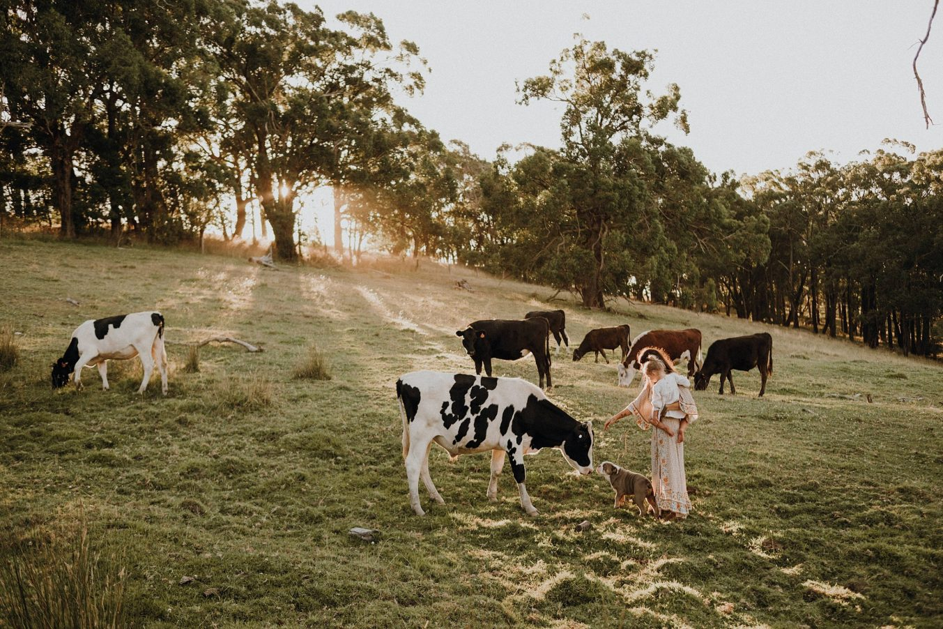 cows-field-family-dog